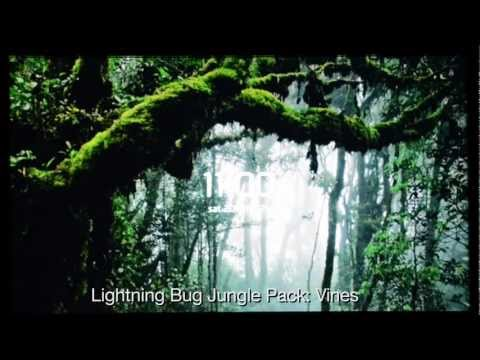 Video of Lightning Bug - Jungle Pack