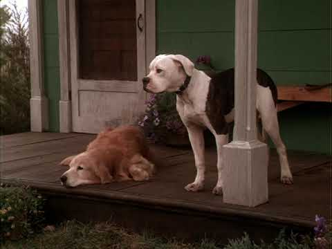Homeward Bound: The Incredible Journey (1993)- Family feelings