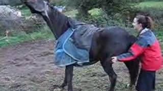 Video Gay, A Very Itchy Horse MP3, 3GP, MP4, WEBM, AVI, FLV Januari 2019