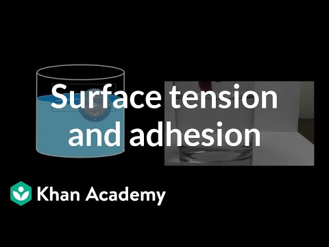 Surface Tension And Adhesion Video Khan Academy