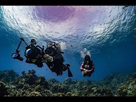 Scuba Diving LIVE in the Cayman Islands - July 12th_Búvárkodás. Heti legjobbak