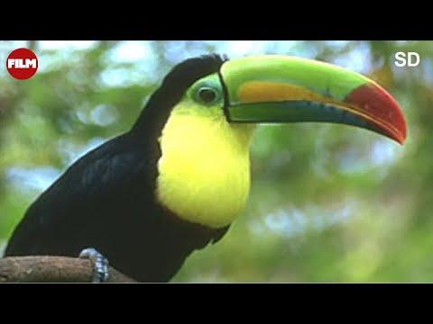 Lasy tropikalne - Tropical Rain Forest