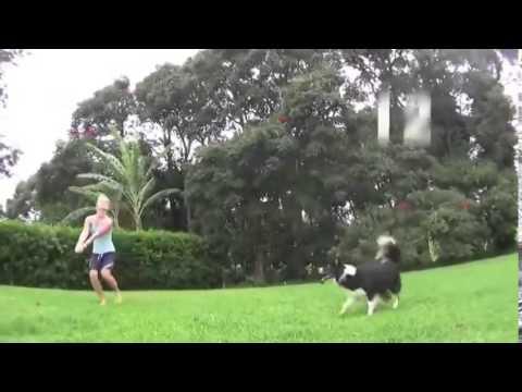 chú chó chơi bóng chuyền cực đỉnh