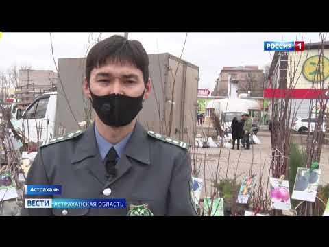 В Астраханской области саженцы плодовых деревьев проверяют на наличие заболеваний и вредителей