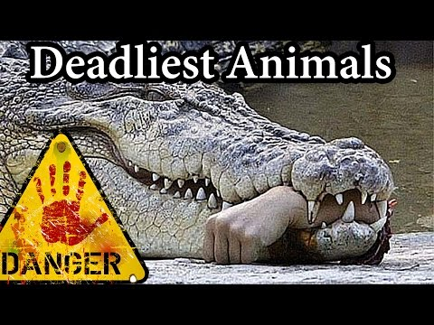 Worlds 10 Most DEADLY Animals! (Do NOT Click If You're Easily Scared)