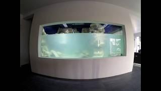 Video Aquarium 13 000L (construction) MP3, 3GP, MP4, WEBM, AVI, FLV Februari 2019