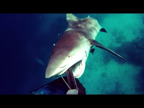 How to fight off a Bull Shark