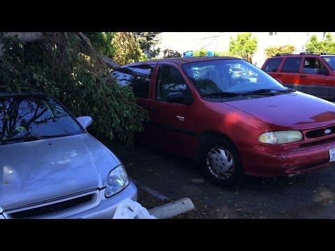 Tree Fail in Mar Vista Crushes Three Cars