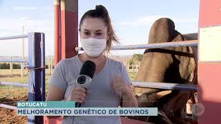 Botucatu tem maior empresa melhoramento genético bovino da América Latina