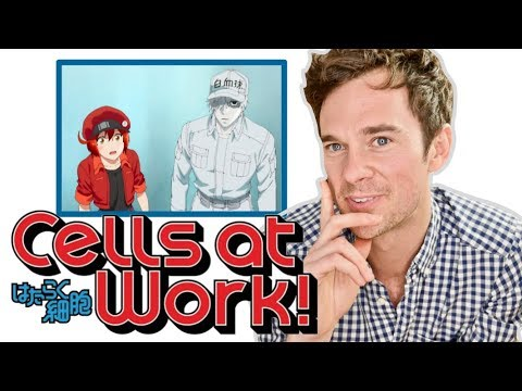 Real DOCTOR reacts to CELLS AT WORK! Anime review - Thời lượng: 17 phút.