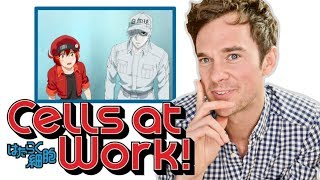 Video Real DOCTOR reacts to CELLS AT WORK! Anime review MP3, 3GP, MP4, WEBM, AVI, FLV September 2018
