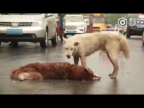 Most Shocking and Unbelievable Videos Of Amazing Animals Caught On Tape