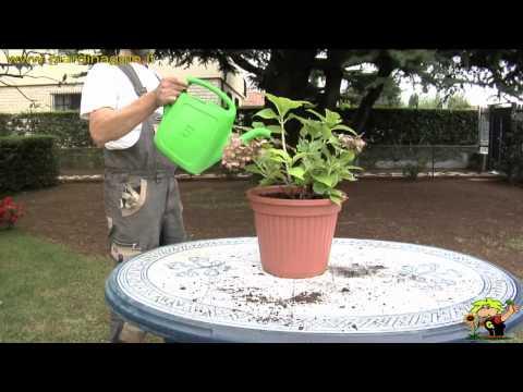 come innaffiare piante e fiori d'estate