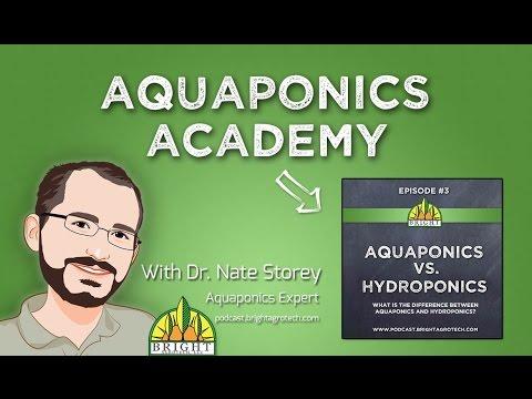 Aquaponics Academy #3: Aquaponics vs. Hydroponics