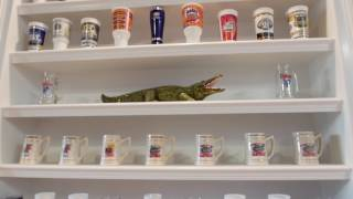 See more Chomp Stories or submit your own at chompstories.com. Jerome is a light-hearted Gator fan from High Springs, Florida.  However, underneath his pleasant demeanor is an intense passion for the Florida Gators that has led him to hundreds of Gator games over the years and even designing his house to display his collection of Gator memorabilia.  Oh yeah, and he was also Billy Donovan's tailor during Coach Donovan's time in Gainesville.