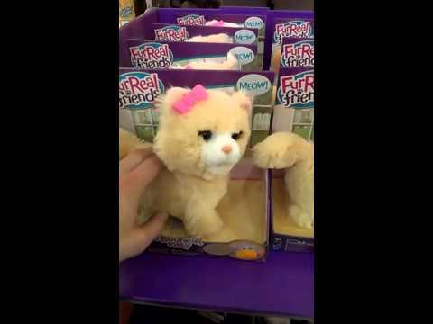 Crazy cat toy