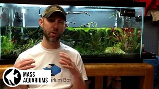 Download Lagu How to REMOVE NITRATES from your Aquarium. 3 steps to Balance Nitrate levels in your Aquarium Mp3