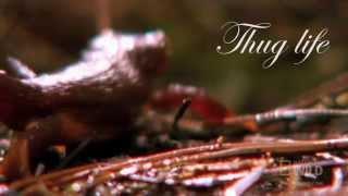 Thug life of the Newt