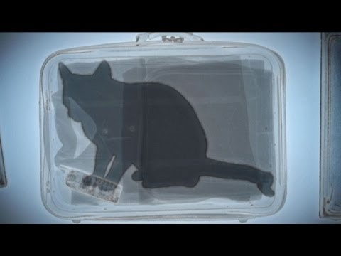 gatto vola fino a disneyworld chiuso nella valigia