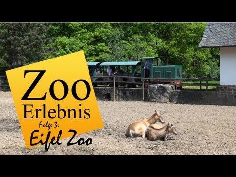 Lünebach: Eifel Zoo - Zoo Erlebnis #3