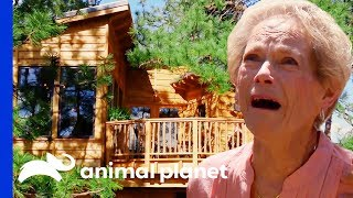 You're Never Too Old For A Treehouse! | Treehouse Masters by Animal Planet