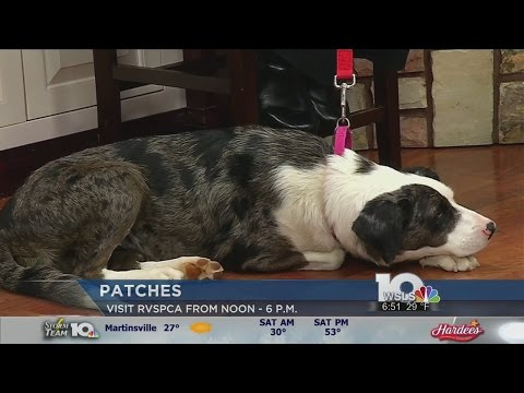 RVSPCA: Help Patches Find a New Home
