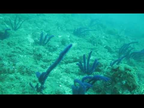 Scuba diving in Negombo with Taprobane Divers