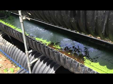 What is Bioponics? How it Compares to Hydroponics and Aquaponics