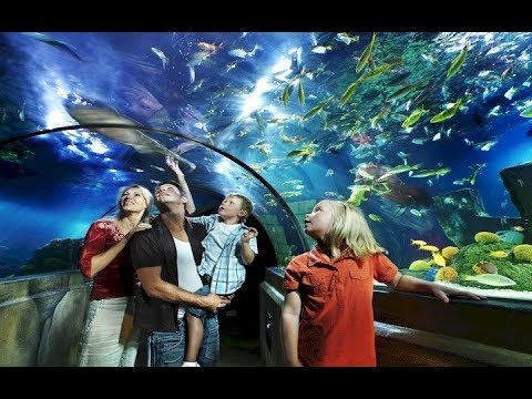 10 Best Tourist Attractions in Birmingham, UK