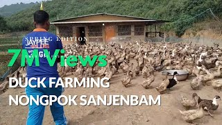 Video Duck Farming Nongpok Sanjembam MP3, 3GP, MP4, WEBM, AVI, FLV Januari 2019