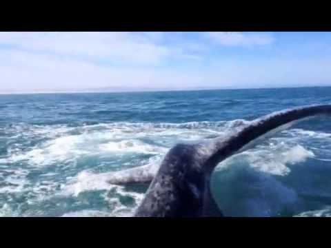 Girl gets slapped in the face by a WHALE!!!
