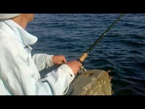 чем и как ловить на черном море
