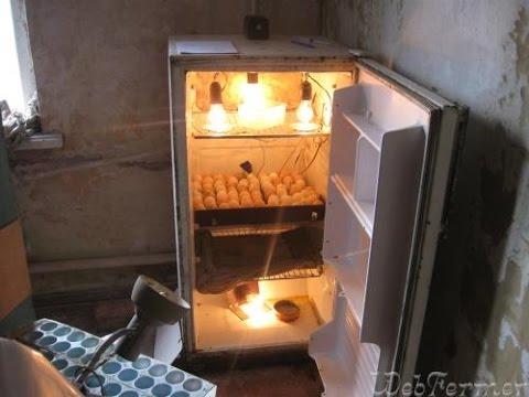 Инкубаторы для цыплят своими руками