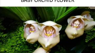 Nonton Different Types Of Orchid Flowers Film Subtitle Indonesia Streaming Movie Download