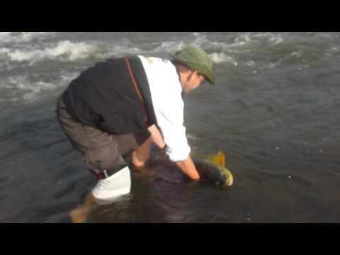Pescaria de Dourados em Porto Xavier na Biguá Turismo