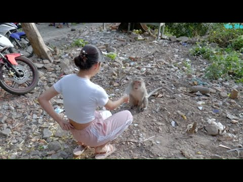 Cùng Vie Girl Chơi Đùa Với Những Chú Khỉ Dễ Thương