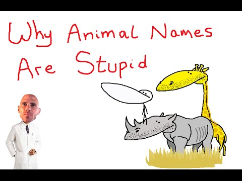 Why Animal Names Are Stupid