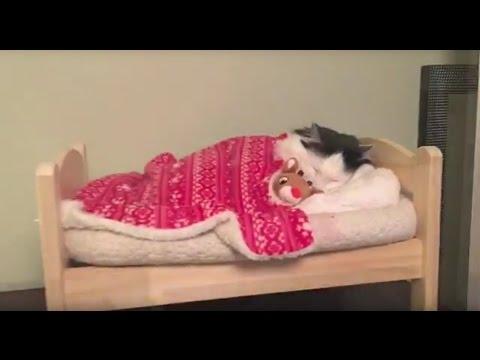 kot-kladzie-sie-do-spania-we-wlasnym-mini-lozeczku