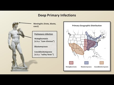 An Overview of Fungal Infections (Fungal Infections - Lesson 2)