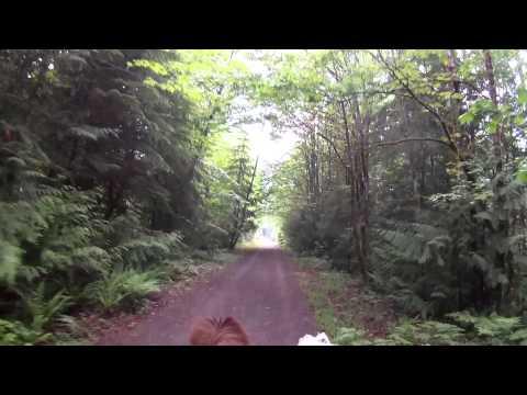 Minipónikkal Kanada legszebb vidékein
