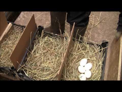 Бункерная кормушки для кроликов своими руками фото