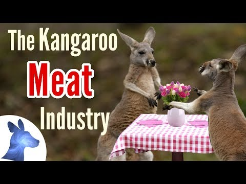 The Kangaroo Meat Industry Explained