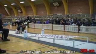 Кроличья олимпиада в Дании 2010