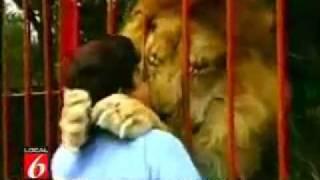 令人驚訝的獅子 緊緊擁抱著救命恩人(動物, 電視節目)