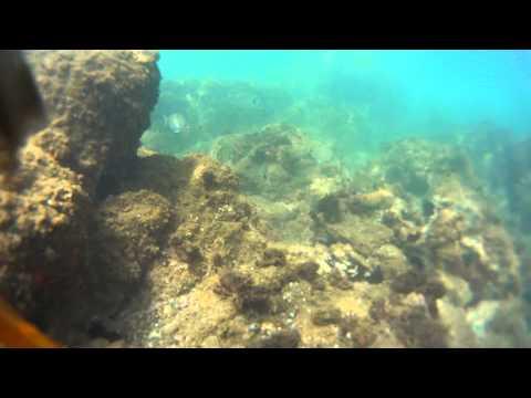 plongée en palme & tuba dans la baie de collioure