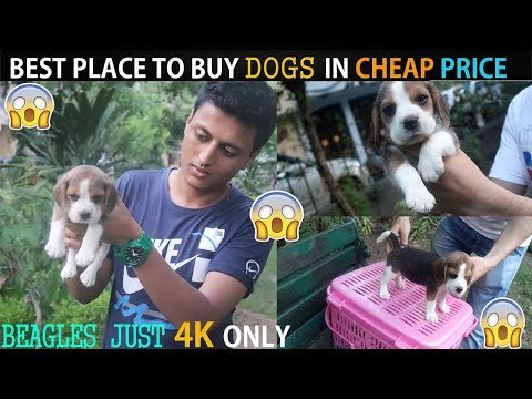 CHEAP DOGS MARKET | WHOLESALE | RETAIL | DOGS IN  CHEAP PRICE WITH PHONE NUMBER  |