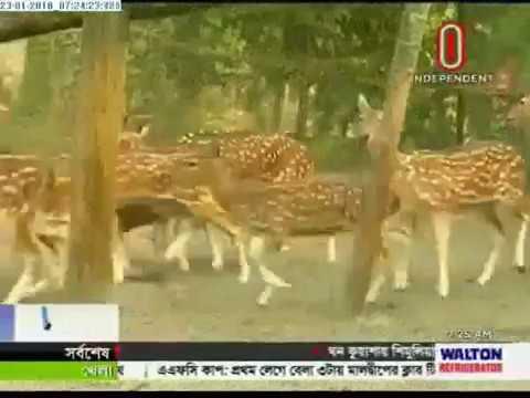 Deer farming gains popularity in Barisal. (23-01-2018)