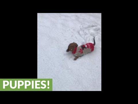 il-bassotto-nella-neve