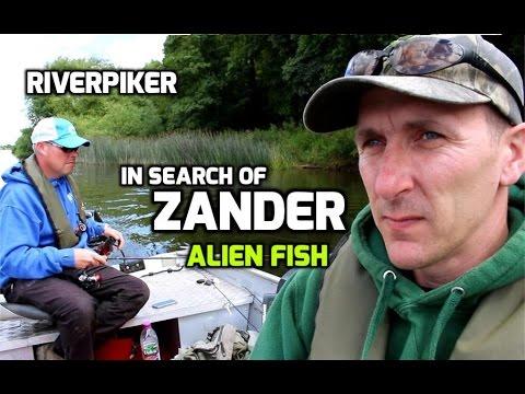 In search of zander - The Alien Fish - (video 147)_Horg�szat vide�k