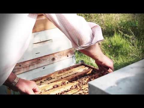 aceto di miele: l'oro liquido che fa digerire e apporta diversi benefici